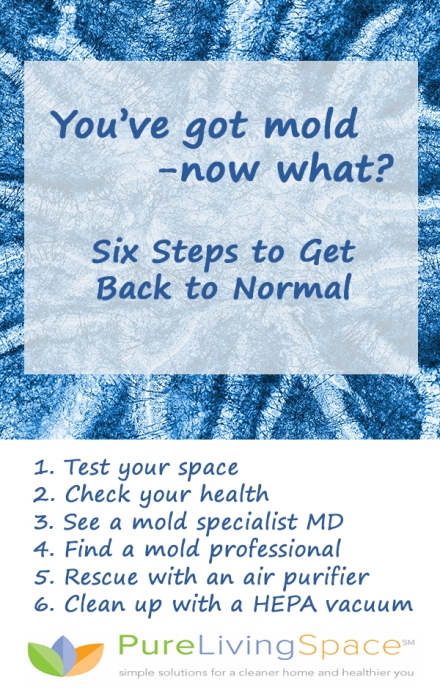 You've Got Mold: Six Steps to Get Back to Normal