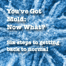 How to Deal with Mold Clean Up