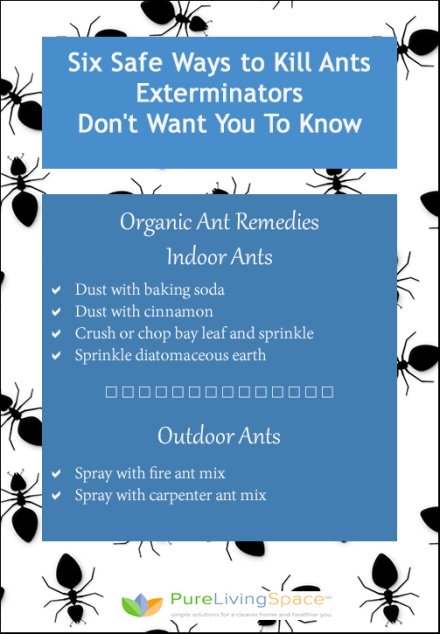 Six Ways to Kill Ants Safely Exterminators Don't Want You to Know