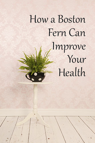 Learn How a Boston Fern Can Clean Up Your Indoor Air